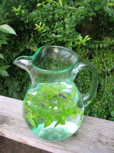 Simple spearmint infusion.