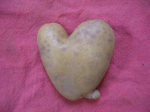 A farmer's market potato heart.
