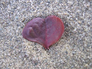 Nature loves. It shows its heart if you look.